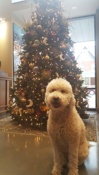 coco christmas tree-1.jpg